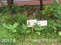 公式カンナ子ども夢プラン里親カンナ - 10 - 江戸川高校