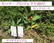 公式カンナ子ども夢プラン里親カンナ - 13 - マツダスタジアム