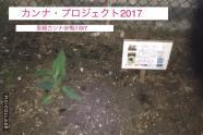 公式カンナ子ども夢プラン里親カンナ - 48 - 鴨川2017年9月7日