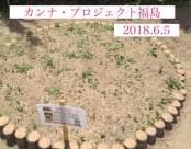 公式カンナ子ども夢プラン里親カンナ - 148 - 2018-06-05 - 福島