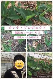 公式カンナ子ども夢プラン里親カンナ - 149 - 2018-06-06 - 福島ビニールハウス