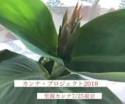 公式カンナ子ども夢プラン里親カンナ - 193 - 2018-07-25 - 東京
